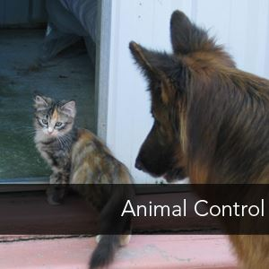 Image Link to Animal Control page